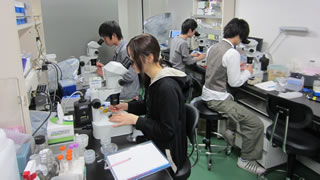 生物科学 実験風景